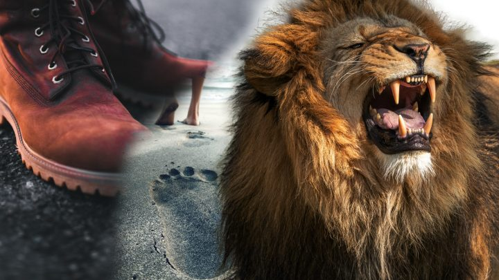 Get Steps Höhle der Löwen